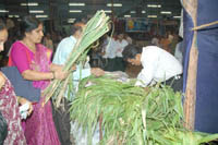 Bhaktas are submitting the home grown fodder at Shri Harigurugraam