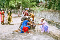Tree Plantation drive by Ahilya Sangha Volunteers (1)